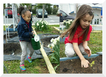 Cougar Paws Community Garden has expanded every year and worked by students in every grade level